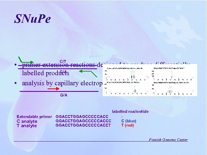 SNu. Pe • primer extension reactions designed to produce differentially labelled products • analysis