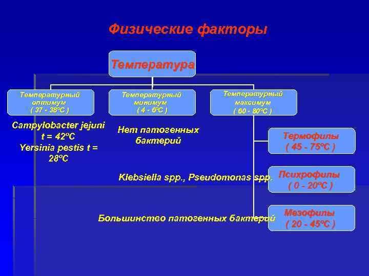Физические факторы Температура Температурный оптимум ( 37 - 38ºC ) Температурный минимум ( 4
