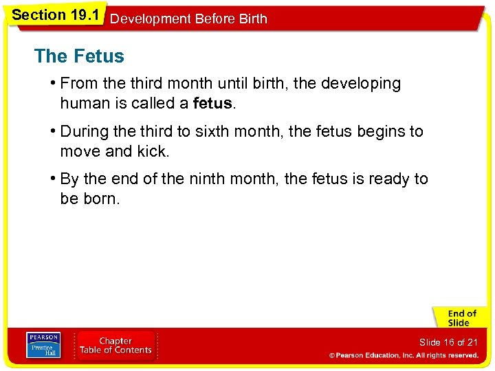 Section 19. 1 Development Before Birth The Fetus • From the third month until