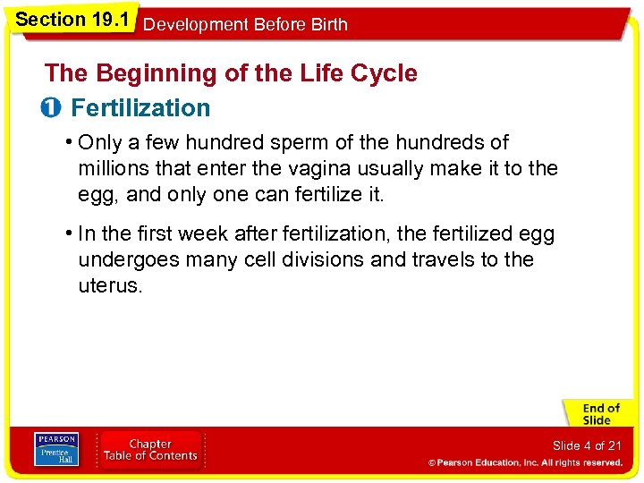 Section 19. 1 Development Before Birth The Beginning of the Life Cycle Fertilization •