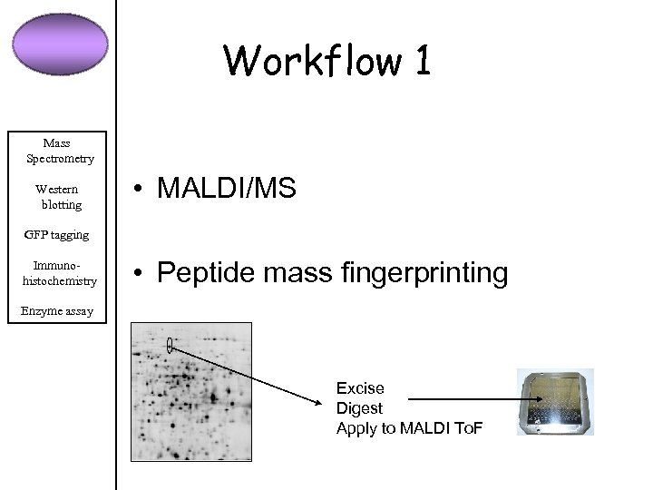Workflow 1 Mass Spectrometry Western blotting • MALDI/MS GFP tagging Immunohistochemistry • Peptide mass