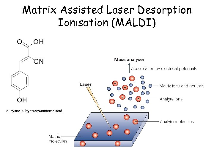 Matrix Assisted Laser Desorption Ionisation (MALDI) a-cyano-4 -hydroxycinnamic acid