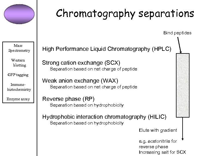Chromatography separations Bind peptides Mass Spectrometry Western blotting High Performance Liquid Chromatography (HPLC) Strong