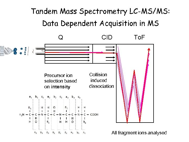 Tandem Mass Spectrometry LC-MS/MS: Data Dependent Acquisition in MS Q Precursor ion selection based