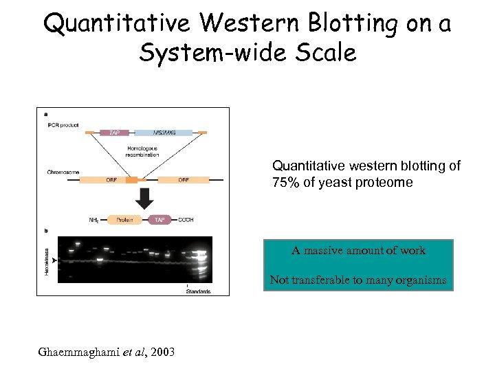 Quantitative Western Blotting on a System-wide Scale Quantitative western blotting of 75% of yeast