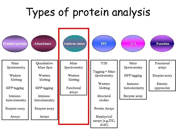 Types of protein analysis Proteins present Mass Spectrometry Western blotting Abundance Quantitative Mass Spec