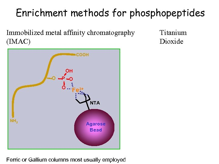 Enrichment methods for phosphopeptides Immobilized metal affinity chromatography (IMAC) COOH OH O P O