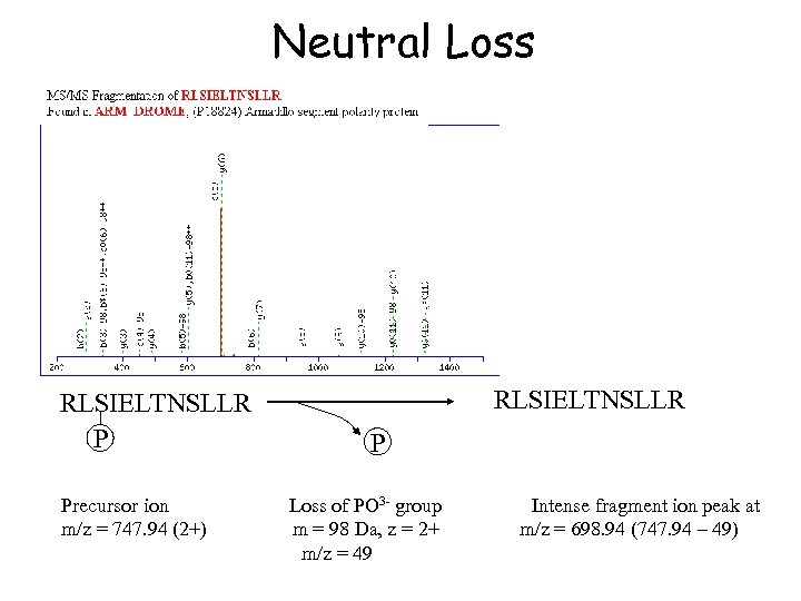 Neutral Loss RLSIELTNSLLR P Precursor ion m/z = 747. 94 (2+) RLSIELTNSLLR P Loss