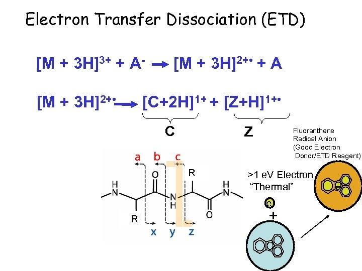 Electron Transfer Dissociation (ETD) [M + 3 H]3+ + A[M + 3 H]2+ •