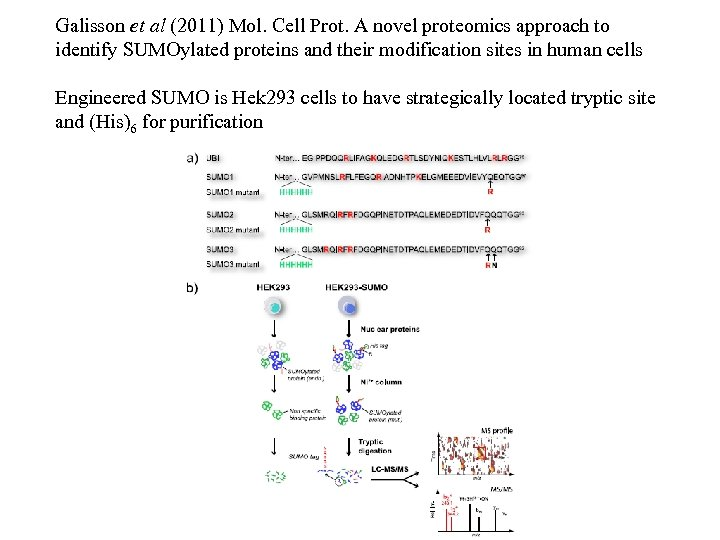 Galisson et al (2011) Mol. Cell Prot. A novel proteomics approach to identify SUMOylated