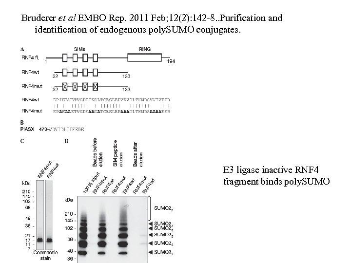 Bruderer et al EMBO Rep. 2011 Feb; 12(2): 142 -8. . Purification and identification