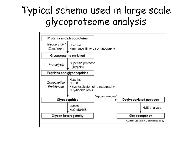 Typical schema used in large scale glycoproteome analysis