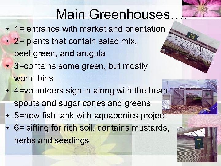 Main Greenhouses…. • 1= entrance with market and orientation • 2= plants that contain