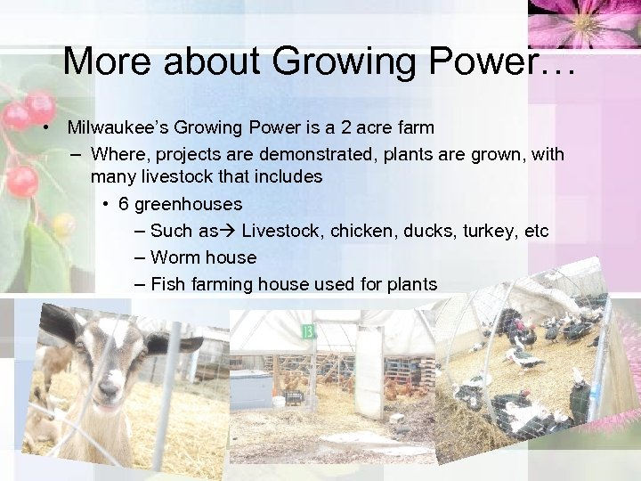 More about Growing Power… • Milwaukee's Growing Power is a 2 acre farm –