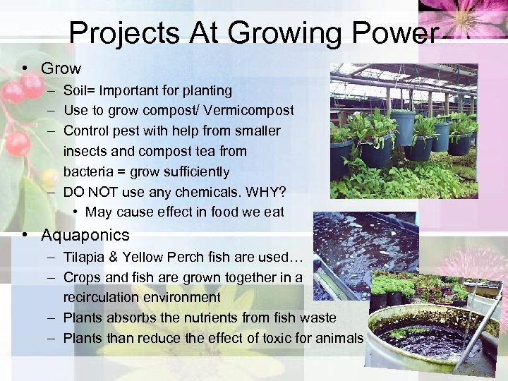Projects At Growing Power • Grow – Soil= Important for planting – Use to