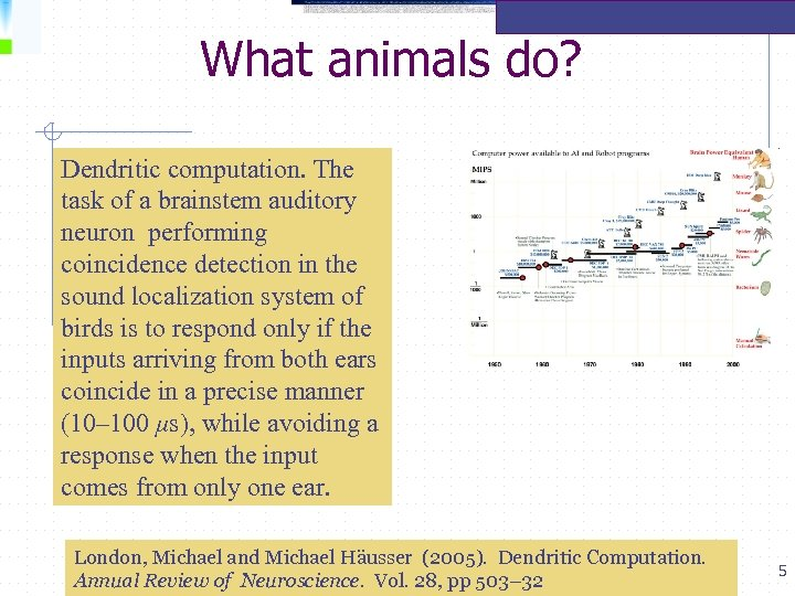 What animals do? Dendritic computation. The task of a brainstem auditory neuron performing coincidence
