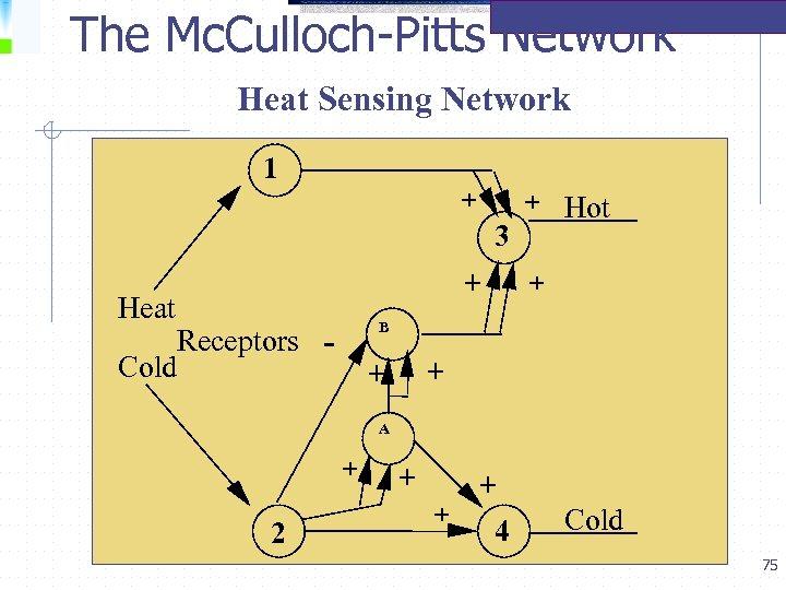 The Mc. Culloch-Pitts Network Heat Sensing Network 1 + 3 + Heat Receptors Cold