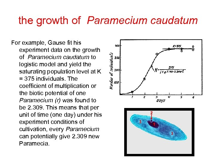 the growth of Paramecium caudatum For example, Gause fit his experiment data on the