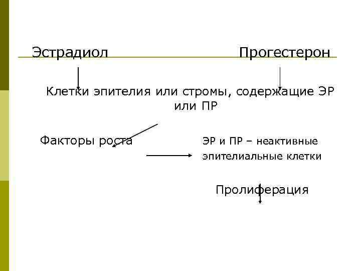 Эстрадиол Прогестерон Клетки эпителия или стромы, содержащие ЭР или ПР Факторы роста ЭР и
