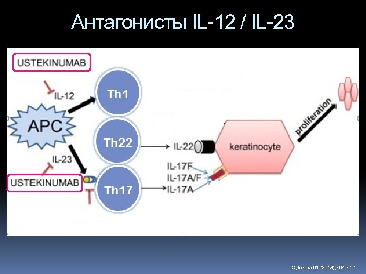 Антагонисты IL-12 / IL-23 Cytokine 61 (2013); 704 -712