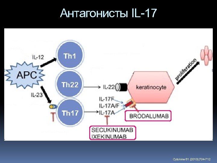Антагонисты IL-17 Cytokine 61 (2013); 704 -712