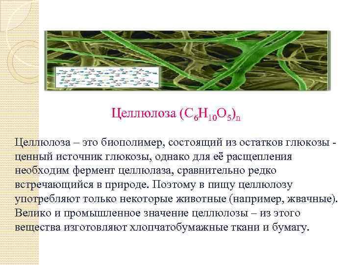 Целлюлоза (С 6 Н 10 О 5)n Целлюлоза – это биополимер, состоящий из остатков