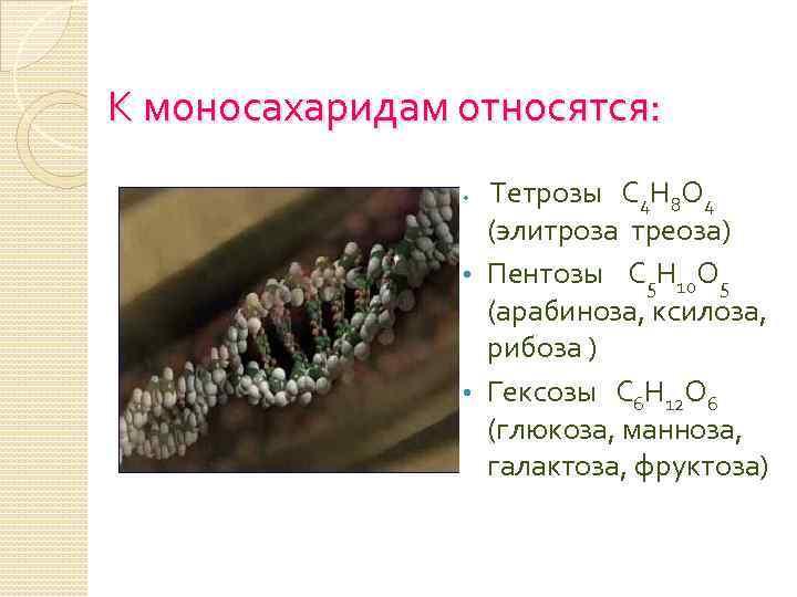 К моносахаридам относятся: Тетрозы С 4 Н 8 О 4 (элитроза треоза) • Пентозы