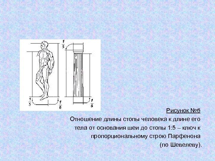Рисунок № 6 Отношение длины стопы человека к длине его тела от основания шеи