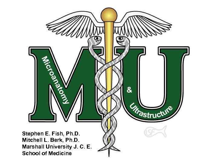 Stephen E. Fish, Ph. D. Mitchell L. Berk, Ph. D. Marshall University J. C.