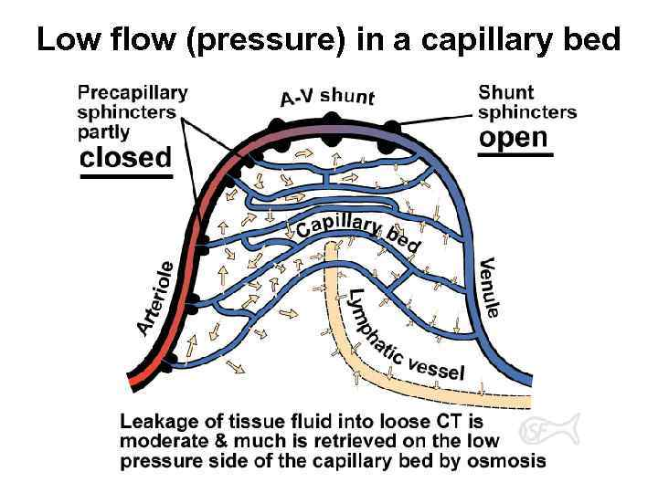 Low flow (pressure) in a capillary bed