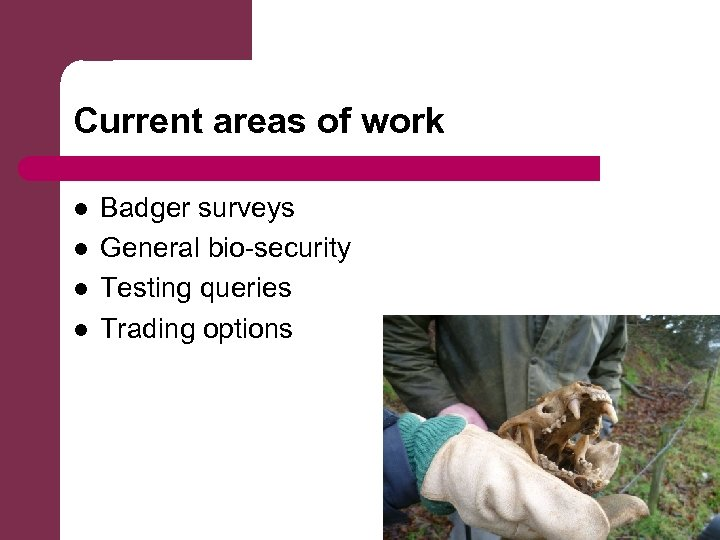 Current areas of work l l Badger surveys General bio-security Testing queries Trading options