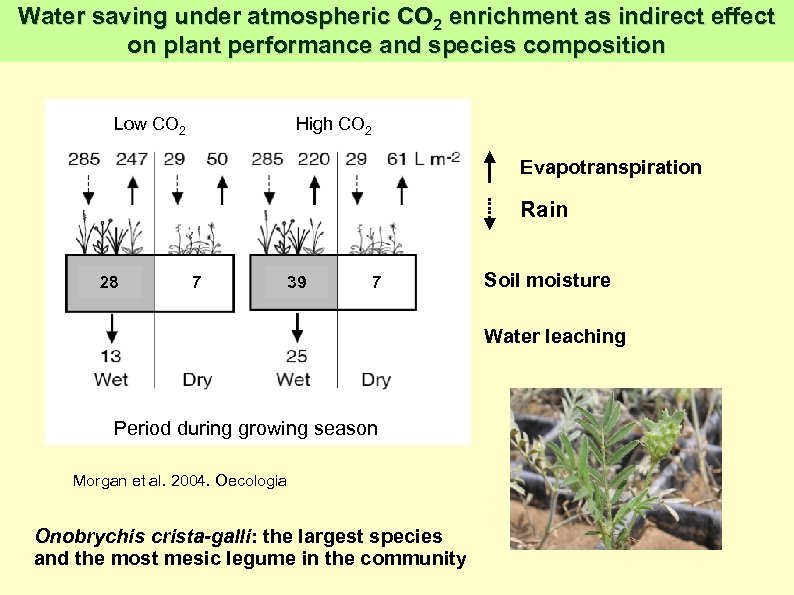 Water saving under atmospheric CO 2 enrichment as indirect effect on plant performance and