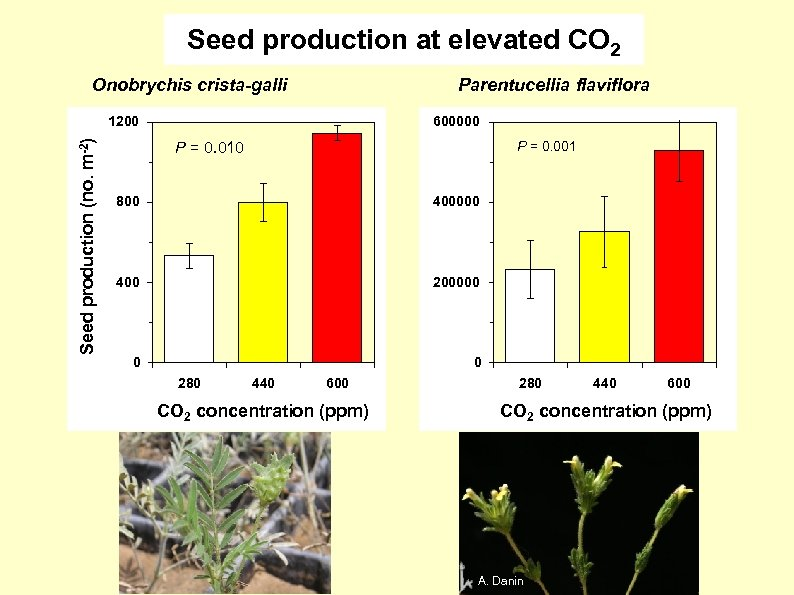 Seed production at elevated CO 2 Onobrychis crista-galli Parentucellia flaviflora 600000 Seed production (no.