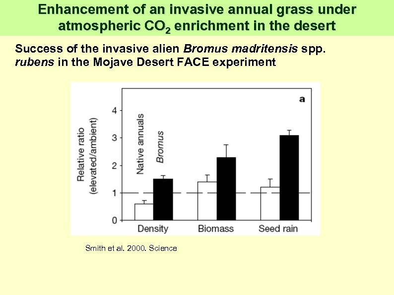 Enhancement of an invasive annual grass under atmospheric CO 2 enrichment in the desert