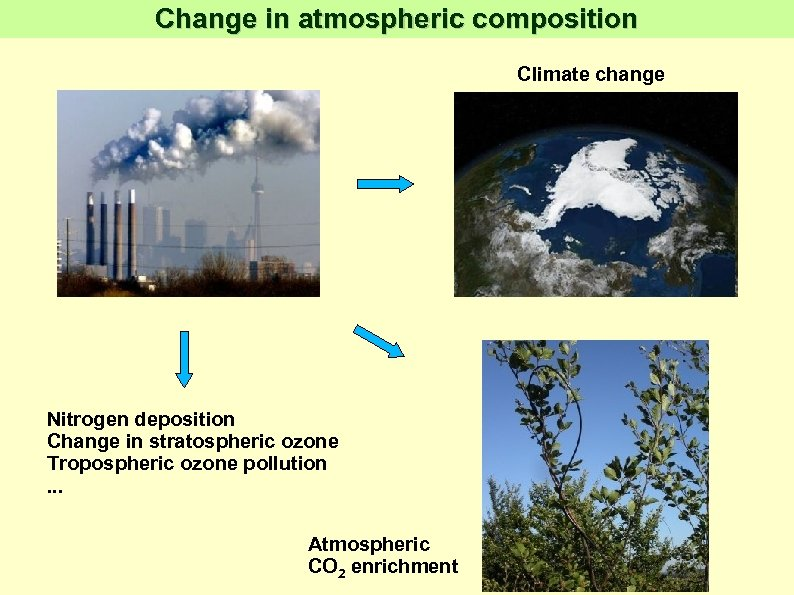 Change in atmospheric composition Climate change Nitrogen deposition Change in stratospheric ozone Tropospheric ozone