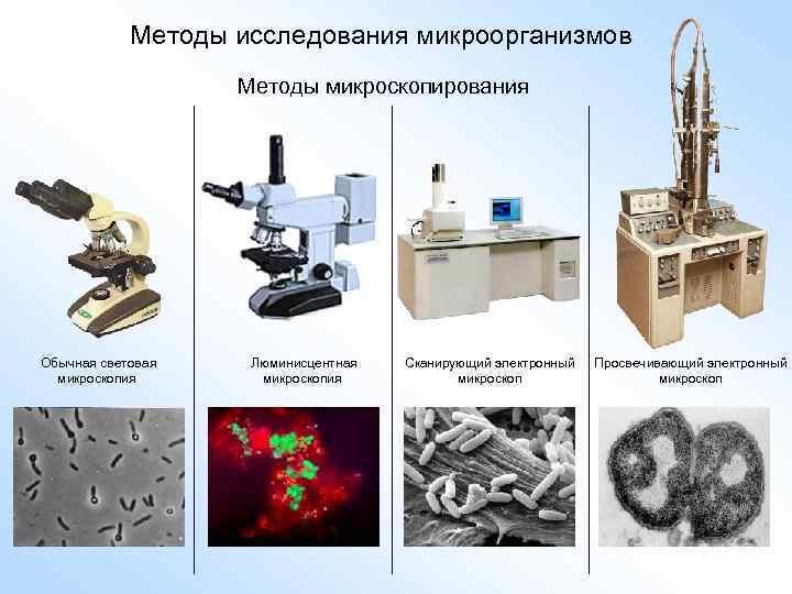 Методы исследования микроорганизмов Методы микроскопирования Обычная световая микроскопия Люминисцентная микроскопия Сканирующий электронный микроскоп Просвечивающий