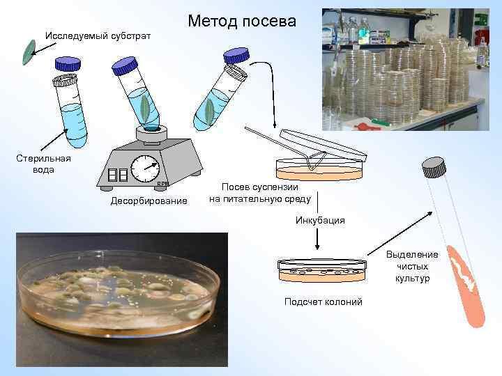 Метод посева Исследуемый субстрат Стерильная вода RPM Десорбирование Посев суспензии на питательную среду Инкубация