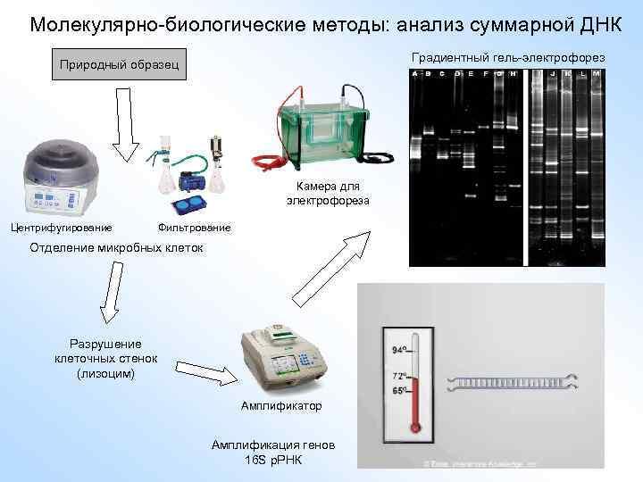 Молекулярно-биологические методы: анализ суммарной ДНК Камера для электрофореза Центрифугирование Фильтрование Отделение микробных клеток Разрушение