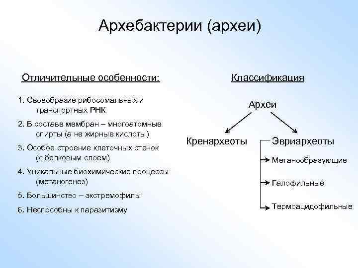 Архебактерии (археи) Отличительные особенности: Классификация 1. Своеобразие рибосомальных и транспортных РНК 2. В составе