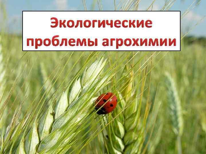 Экологические проблемы агрохимии