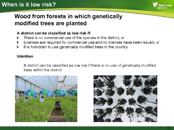 When is it low risk? Wood from forests in which genetically modified trees are