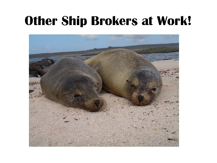 Other Ship Brokers at Work!