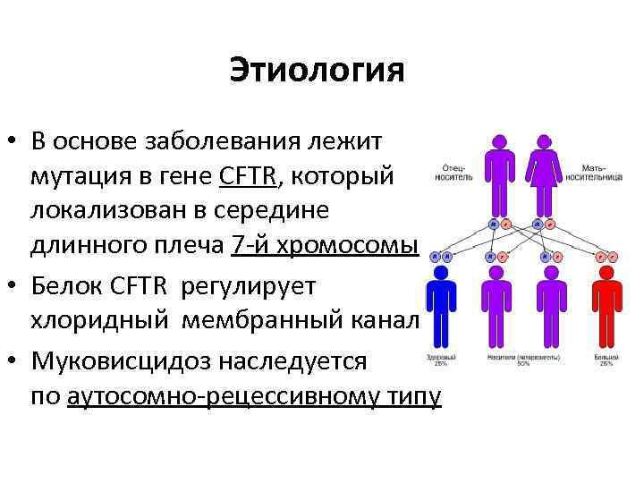 Этиология • В основе заболевания лежит мутация в гене CFTR, который локализован в середине