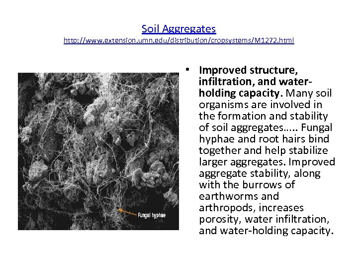 Soil Aggregates http: //www. extension. umn. edu/distribution/cropsystems/M 1272. html • Improved structure, infiltration, and