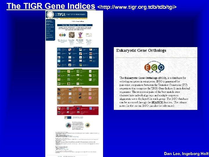 The TIGR Gene Indices <http: //www. tigr. org. tdb/tgi> Dan Lee, Ingeborg Holt