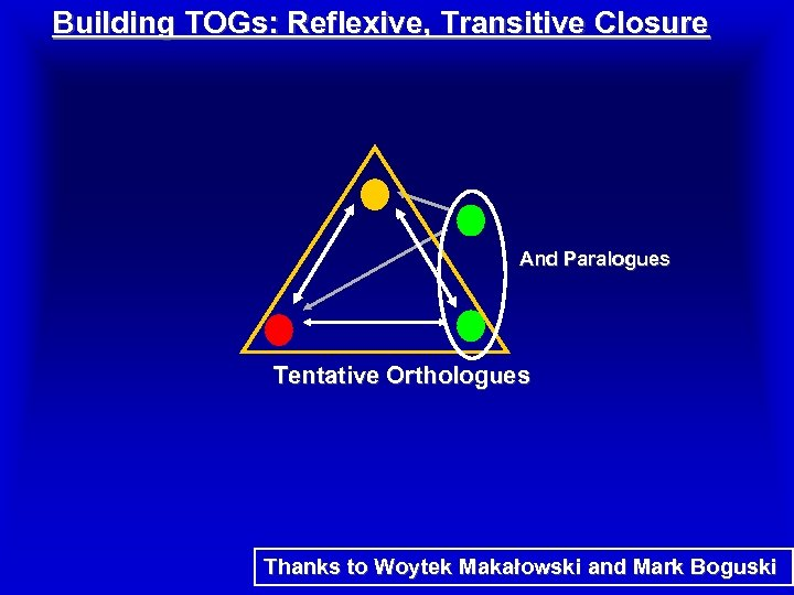 Building TOGs: Reflexive, Transitive Closure And Paralogues Tentative Orthologues Thanks to Woytek Makałowski and