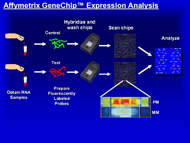 Affymetrix Gene. Chip™ Expression Analysis Control Hybridize and wash chips Scan chips Analyze Test