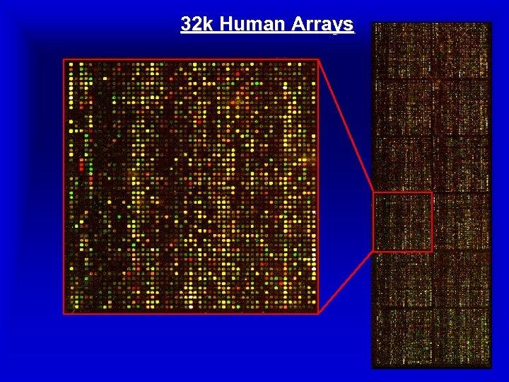 32 k Human Arrays