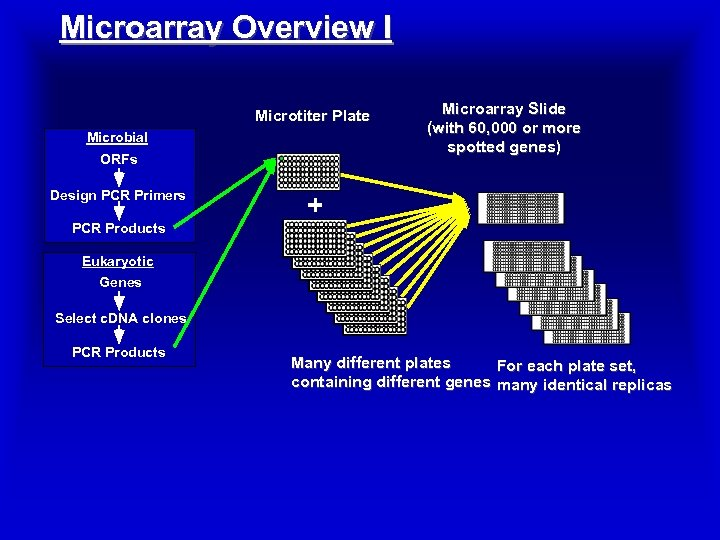 Microarray Overview I Microtiter Plate Microbial ORFs Design PCR Primers Microarray Slide (with 60,