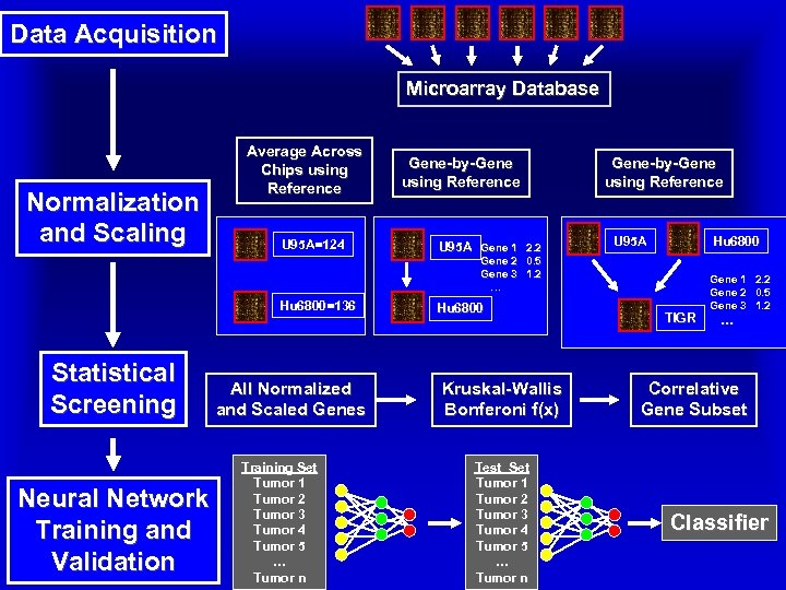 Data Acquisition Microarray Database Normalization and Scaling Average Across Chips using Reference U 95